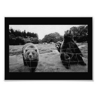 Friendly Bears Photo Print