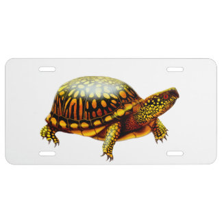 Friendly Eastern Box Turtle License Plate