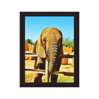 Friendly Elephant Canvas Print