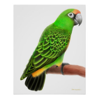 Friendly Jardines Parrot Print