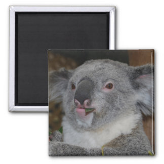 Friendly Koala Magnet