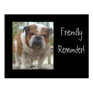 Friendly Reminder English Bulldog Postcards