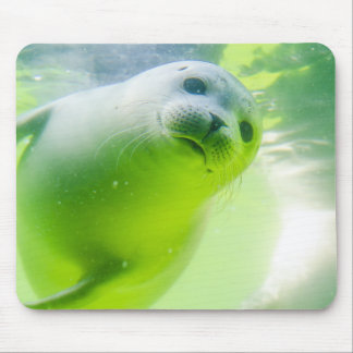 Friendly Seal Mouse Pad