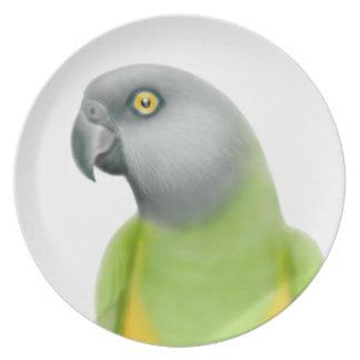 Friendly Senegal Parrot Plate