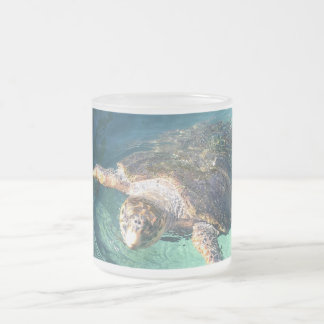 Friendly Turtle in Mexico Frosted Glass Coffee Mug