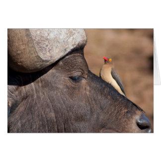 Friends: Cape Buffalo and Ox Pecker Card