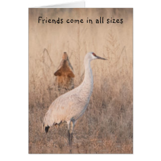 Friends Come in all Sizes Card