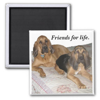 Friends for life. magnet