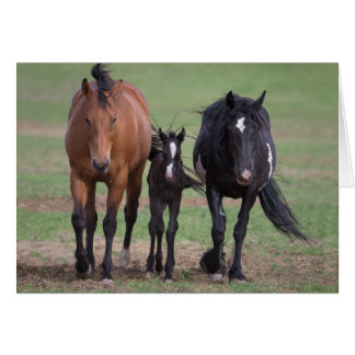 Friends - Galloping to Freedom Greeting Card