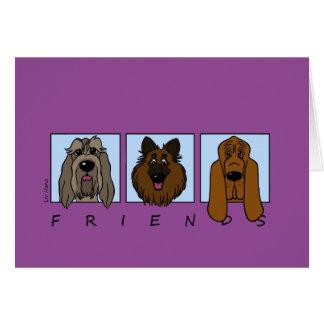 Friends: Spinone Italiano, Tervueren, Bloodhound Card