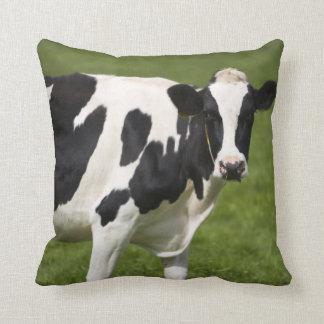 Friesian cow pillows