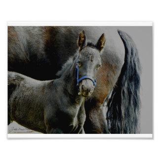 Friesian Foal Malachi Photo Print