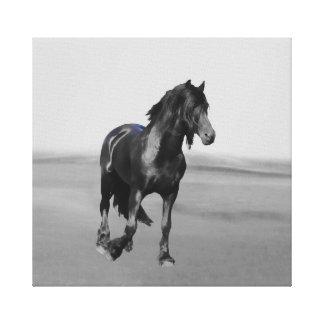 Friesian Horse Canvas Prints