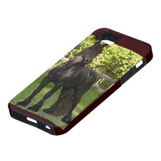 Friesian Horse iPhone 5 Cover