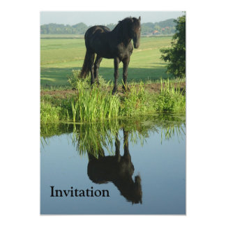 Friesian Horse Reflection in water 5x7 Paper Invitation Card