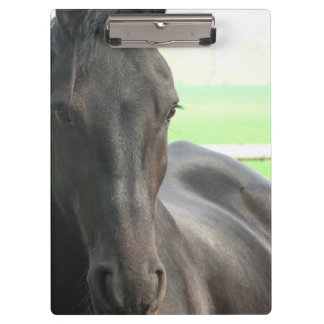 Friesian Horses Clipboard
