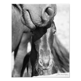 Friesian mare and foal black and white photo print