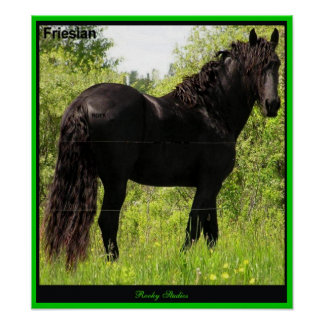 Friesian Photo Print