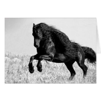 Friesian Stallion Leaps - Horse Greeting Card