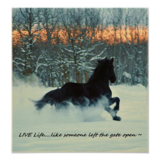 Friesian Winter Frolic Poster