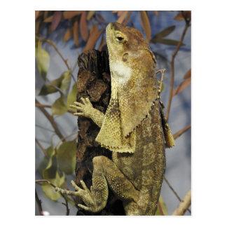 Frill-necked lizard postcard