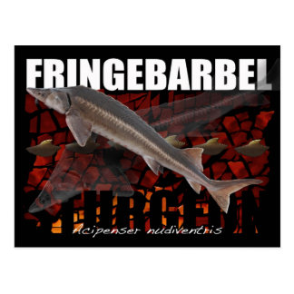 Fringebarbel-Ship Sturgeon Postcard