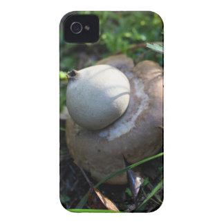 Fringed earthstar (Geastrum fimbriatum) iPhone 4 Case-Mate Case