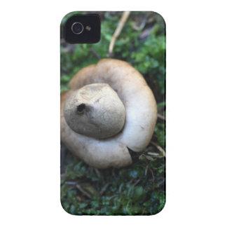 Fringed earthstar (Geastrum fimbriatum) iPhone 4 Cases