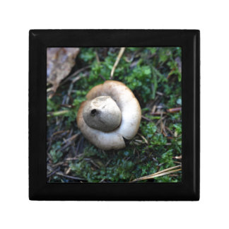 Fringed earthstar (Geastrum fimbriatum) Trinket Box