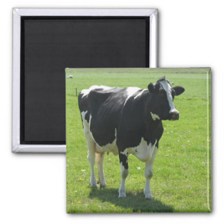 Frisian cow in green meadow Fridge Magnet