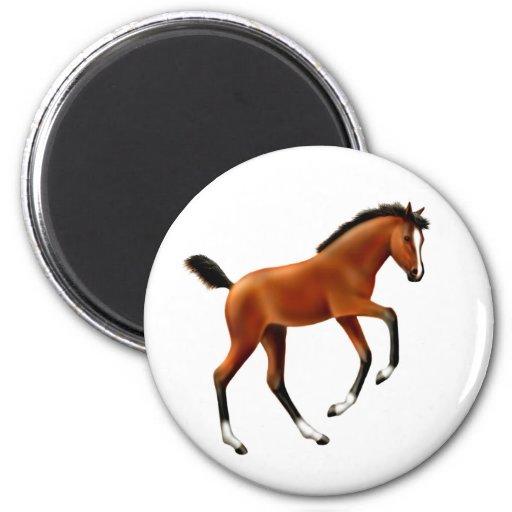 Frisky Foal Round Magnet