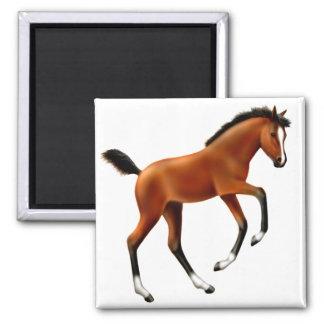 Frisky Foal Square Magnet