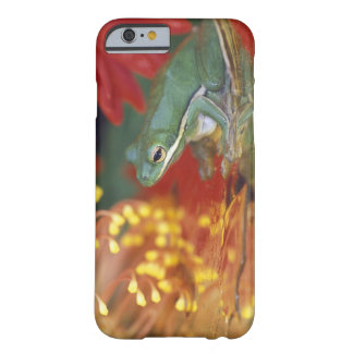 Frog and reflections among flowers. Credit as: Barely There iPhone 6 Case