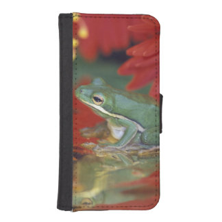 Frog and reflections among flowers. Credit as: Phone Wallet