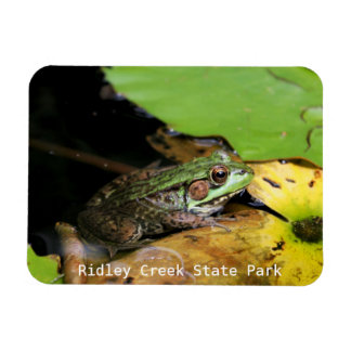 Frog at Ridley Creek State Park Rectangular Photo Magnet