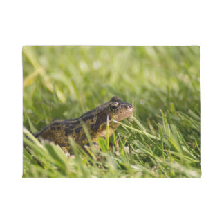 Frog Doormat