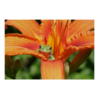 Frog-Flower Poster