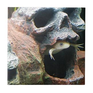 Frog in a Skull Ceramic Tiles