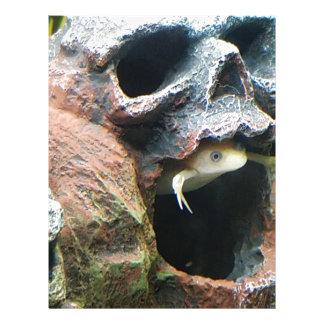 Frog in a Skull Letterhead