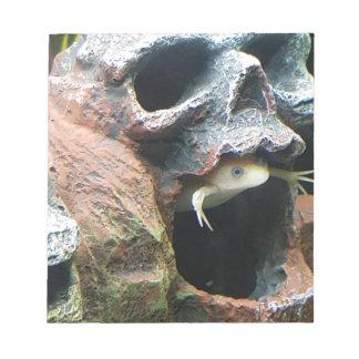 Frog in a Skull Notepad