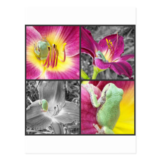 Frog in flower collage postcard
