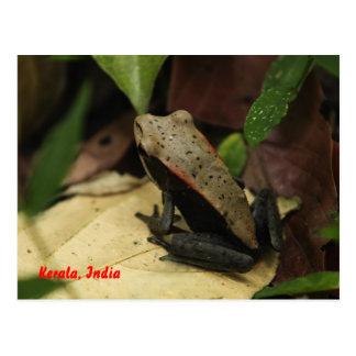 Frog in Kerala, India Postcard