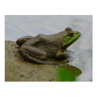 Frog in the Mud Postcard