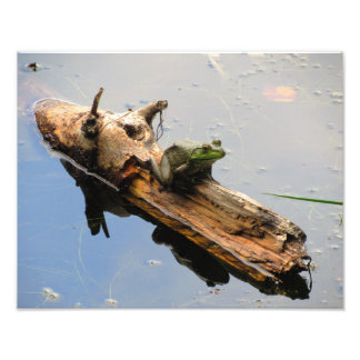 Frog On a Log Photo Print