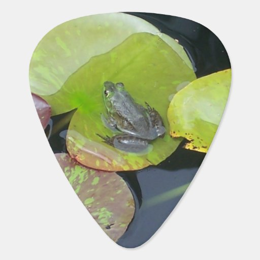 Frog On Lily Pad Close Up  (Nature Scene) Pick