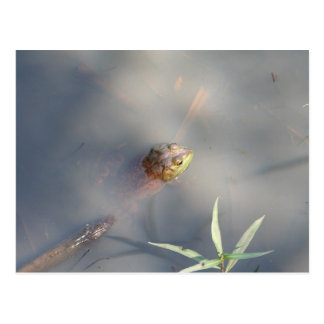 Frog, Sanctuary Marsh Postcard