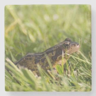 Frog Stone Coaster