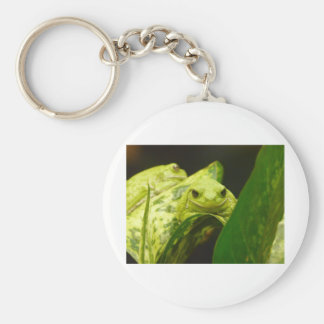 frog tree frog key chains