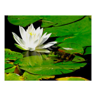 Frog with Water Lily Reflection Poster