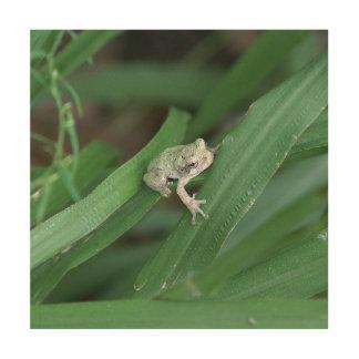 Frog, Wood Wall Art Print.